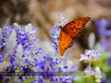 butterfly-busch-gardens_w | Naples Photographer Lacie Oakey