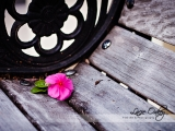 pink-flower-on-bench_w