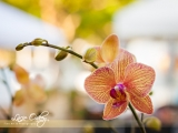 warm-orchids-3_sm_w